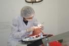 Projeto FOB, realizará atendimentos em Odontologia e Fonoaudiologia na 35ª Expedição, em Monte Negro