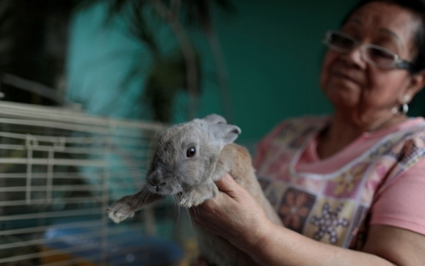 Maduro lança plano coelho para abastecimento de carne