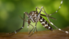 Monte Negro: SEMUSA promove ação contra mosquito transmissor da dengue, chikungunya e Zika Vírus