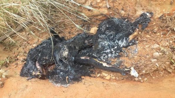 Jaru: Corpo de homem é encontrado queimado as margens da linha 610