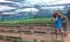 Secretaria Municipal de Agricultura faz entrega de 50 Mil mudas de