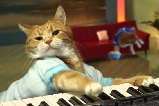 Gato Bento, do meme Keyboard Cat, falece aos nove anos