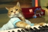 Gato Bento, do meme Keyboard Cat, falece aos nove anos