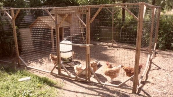 Monte Negro: Galinhas são furtadas de galinheiro em propriedade na cidade