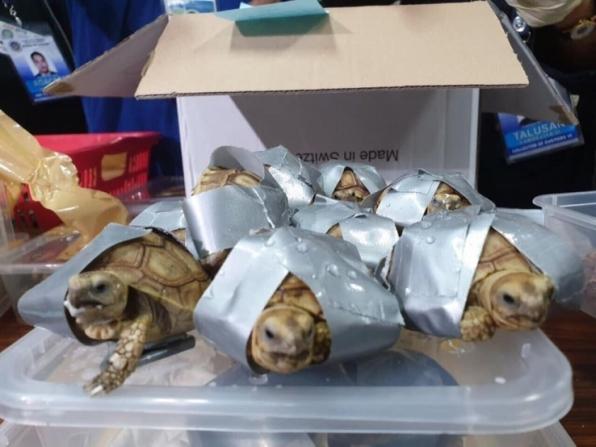 Polícia das Filipinas apreende 1,5 mil tartarugas em malas abandonadas em aeroporto