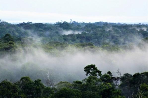 Projeto de Flávio Bolsonaro e Bitar acaba com a reserva florestal obrigatória em propriedades rurais