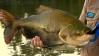 Período do defeso para 7 espécies de peixes termina, em RO