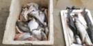 Dois pescadores são presos com 50 quilos de peixe na RO-133